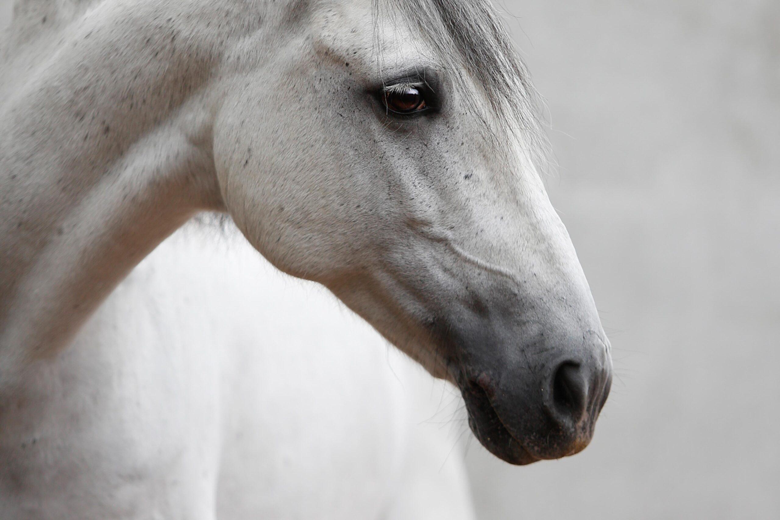 MVDL-paard-19