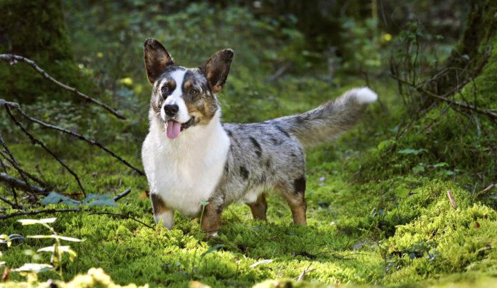 Doggo 2